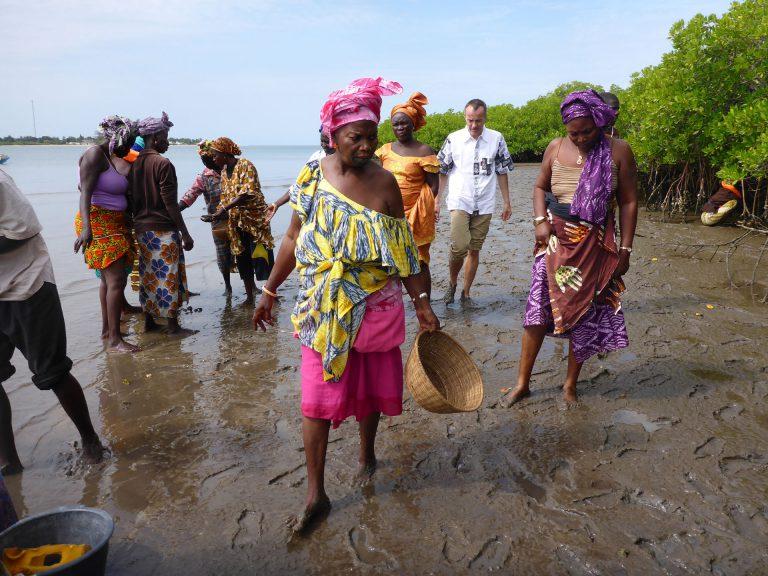 Fastenopfer-Direktor Patrick Renz in Senegal, wo das Hilfswerk das Aufforsten der Mangrovenwälder unterstützt. | © 2015 Fastenopfer / Vreni Jean-Richard