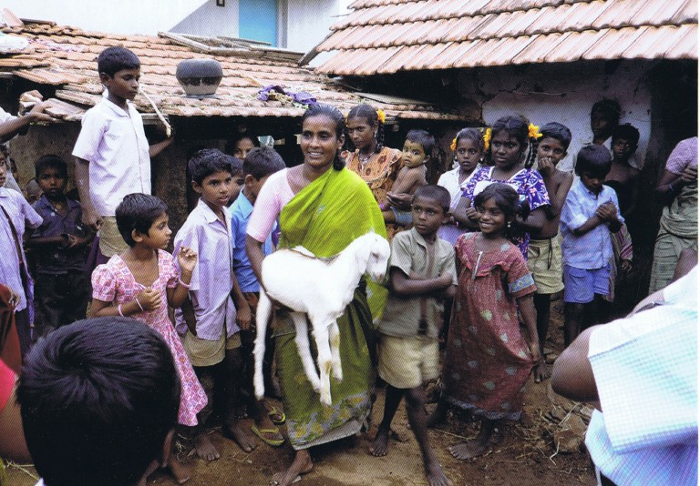 Eine einzige Ziege kann für eine indische Familie das Startkapital sein, das sie aus der bittersten Armut führt | © 2016 pd