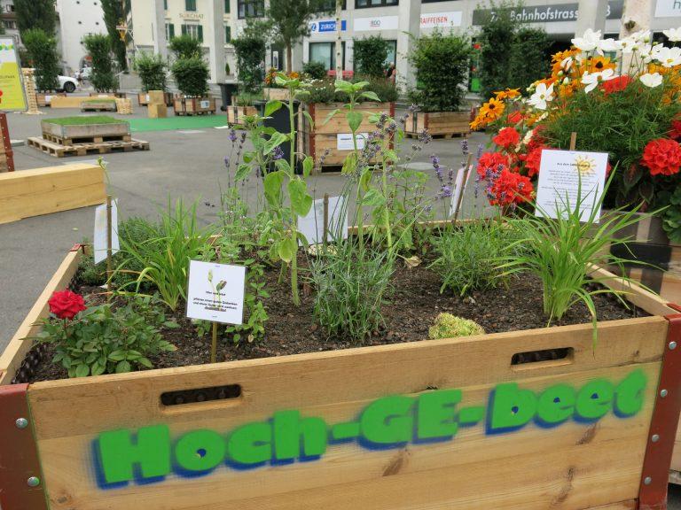 Die «Hoch-GE-beete» der Pfarrei Sursee verwandeln den Martignyplatz derzeit in einen blühenden Garten. | © 2016 Claudio Tomassini
