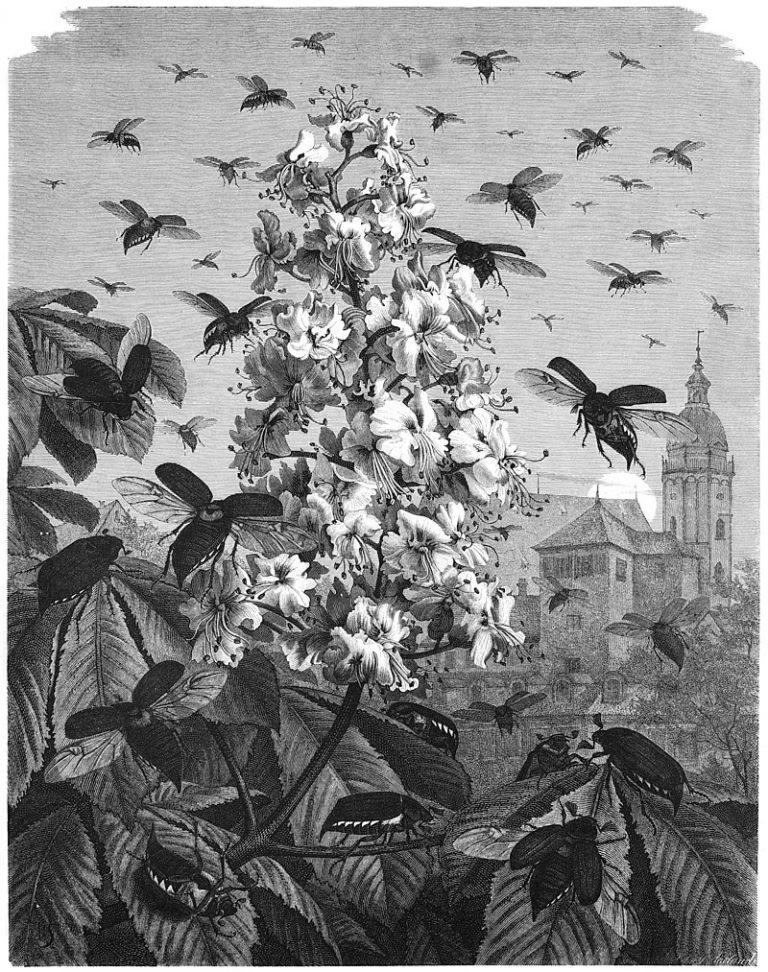 Emil Schmidt: «Maikäfer, flieg!», Die Gartenlaube, 1879.