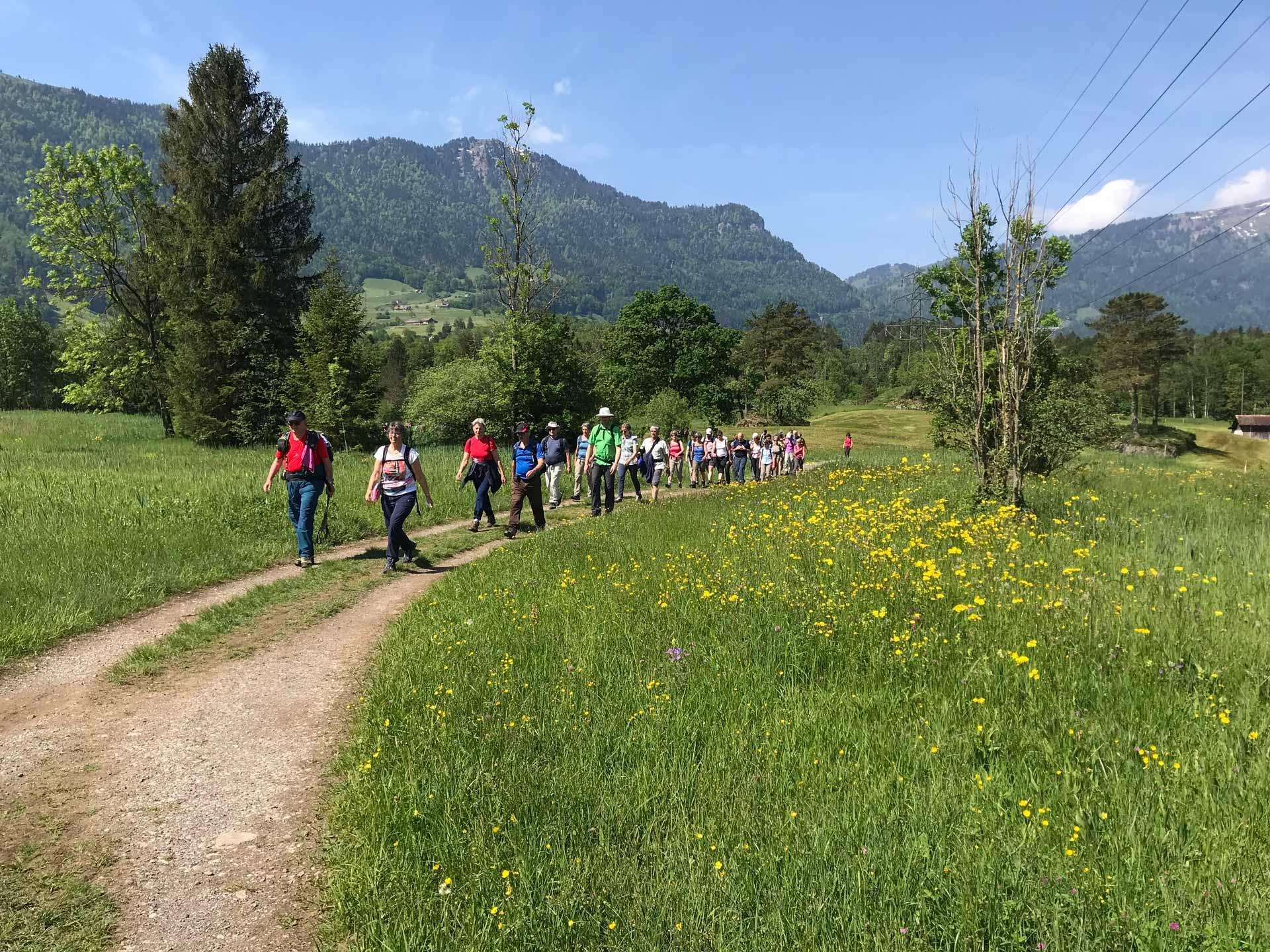 Natur pur:  Auf der Fusswallfahrt 2018 zwischen Arth-Goldau und dem Lauerzersee. | © 2018 Hubert Aregger